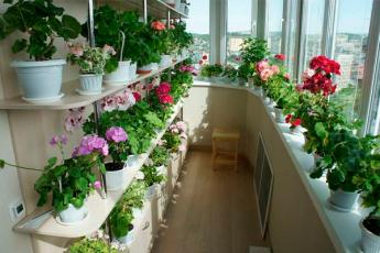 Шикарный цветник дома. Секрет – в подкормке! 9 хитростей составления цветочного меню