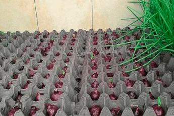 Интересный способ выращивания лука. А вы знали?