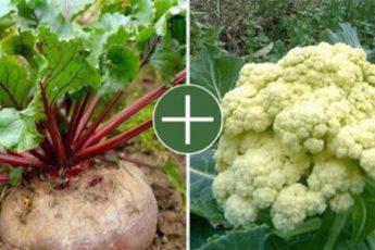 Какие овощи хорошо растут рядом друг с другом