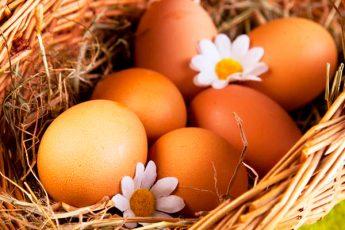 """Разница между """"промышленными"""" и фермерскими яйцами"""