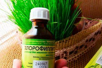 «Хлорофиллипт»: цена вопроса — копейки!