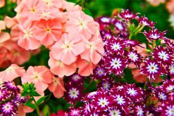 Садовые долгожители: какие многолетники лучше сажать на даче