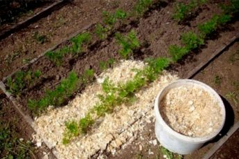 10 лайфхаков для тех, кто хочет вырастить урожай без лишних затрат
