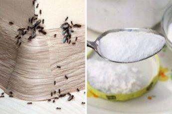 Супер способ избавиться от муравьев в доме и на огороде
