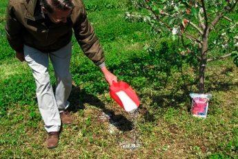 Правильный уход за яблонями, для сохранения и увеличения урожая