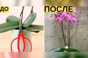 Ваша любимая орхидея будет цвести весь год! 7 важных советов
