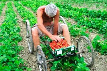 Маленькие хитрости опытных садоводов