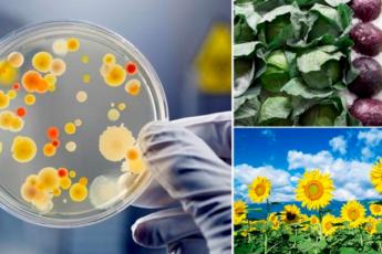 10 продуктов, которые эффективно выводят токсины из организма
