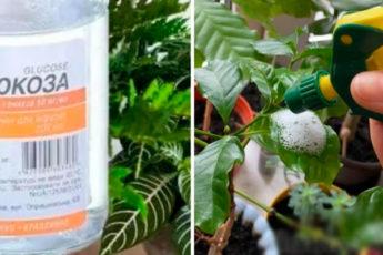 5 лайфхаков по уходу за комнатными растениями, которые вряд ли пришли бы в голову