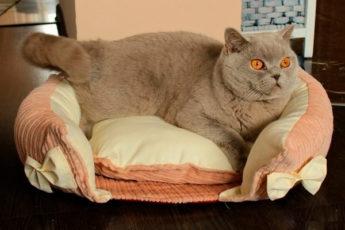 Удобный и красивый диванчик для кошки: мастер-класс