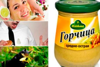 15 нестандартных способов полезного применения горчицы в доме