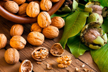 Грецкий орех: свойства, польза и вред для здоровья