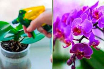Как помочь орхидее зацвести: советы опытных цветоводов