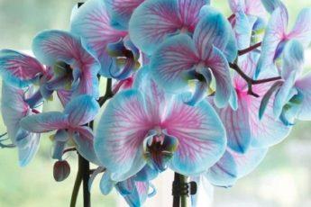 Сорта орхидей: самые красивые виды, фото и названия