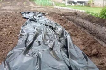 Интересный способ посадки огурцов: можно не поливать весь сезон