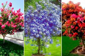 Самые красивые деревья для уютного и милого садового участка